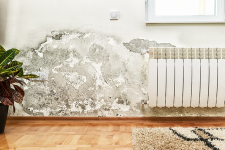 Mold Damage Insurance Claims Adjuster
